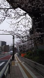 20160402桜(その3)