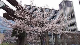 20160402桜(その12)