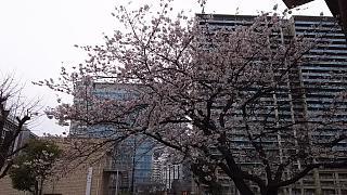 20160402桜(その14)