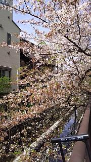 20160409桜(その2)