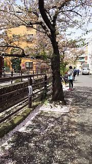 20160409桜(その4)