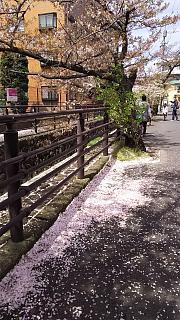20160409桜(その5)