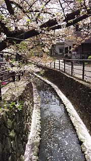 20160409桜(その10)