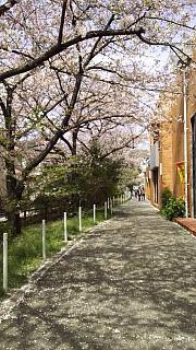 20160409桜(その14)