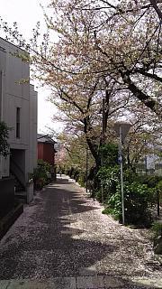 20160409桜(その18)