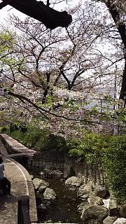 20160409桜(その22)
