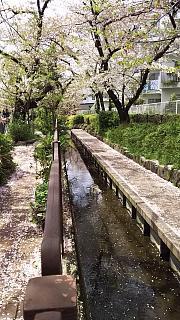 20160409桜(その24)