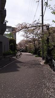 20160409桜(その25)