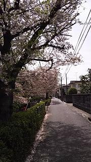 20160409桜(その29)
