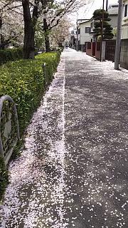 20160409桜(その30)