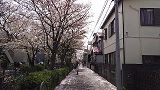 20160409桜(その34)