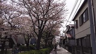 20160409桜(その36)