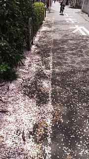 20160409桜(その38)