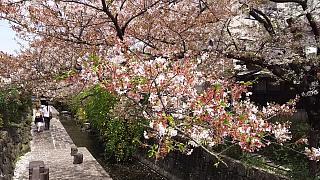 20160409桜(その41)