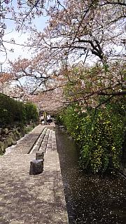 20160409桜(その42)