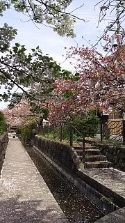 20160409桜(その44)