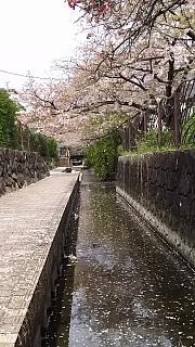 20160409桜(その46)