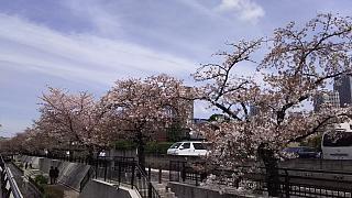 20160409桜(その53)