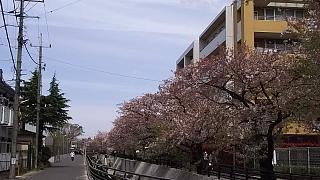 20160409桜(その57)