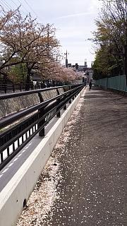 20160409桜(その66)