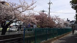 20160409桜(その68)