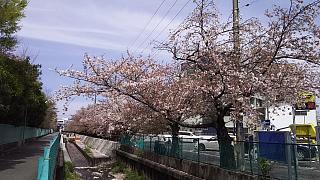 20160409桜(その70)