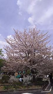 20160409桜(その78)