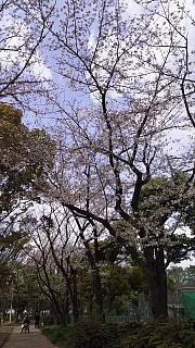 20160409桜(その79)