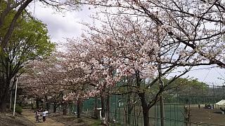20160409桜(その81)