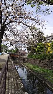 20160409桜(その84)