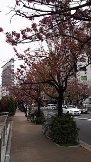 20160410銀座(その3)