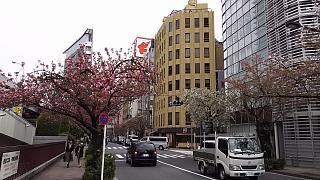 20160410銀座(その5)