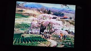 20160411三春の滝桜(その3)