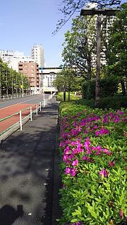 20160419通勤路(その2)