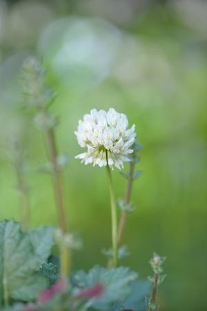 clover2016512-1.jpg