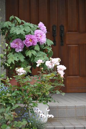 garden2016418-4.jpg
