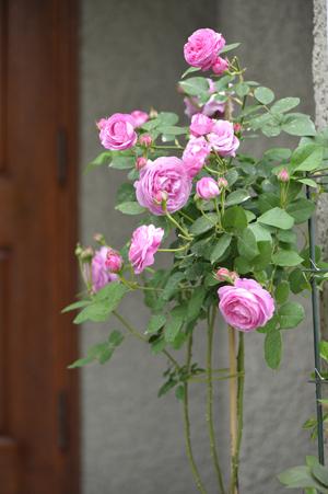 garden2016418-5.jpg