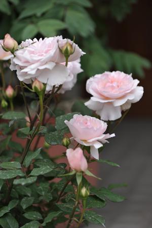 garden2016418-6.jpg