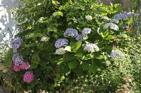 garden2016614-2.jpg