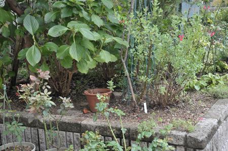 garden2016829-1.jpg