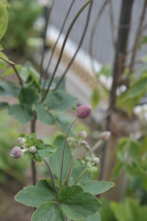 garden2016829-2.jpg