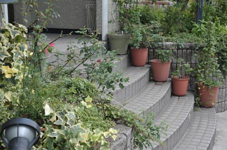 garden2016829-3.jpg