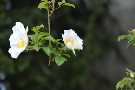 naniwa2016429-13.jpg