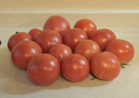 tomato2016713-1.jpg