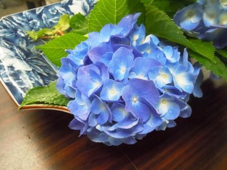 紫陽花1〈2016-06-07)