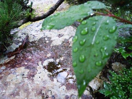 雨の一日3(2016-06-12)