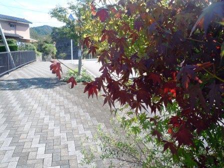 紅葉2(2016-10-09)