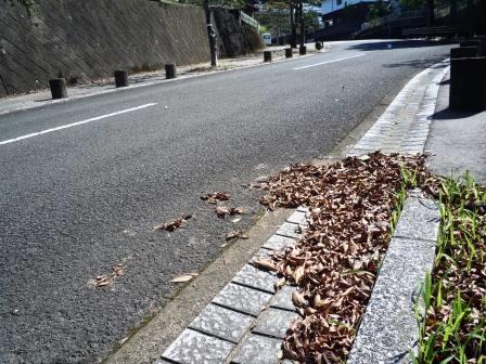 枯葉・国道2〈2016‐10‐09〉