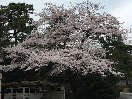 20160410inuidori.jpg
