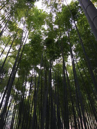 20160410kamakura.jpg